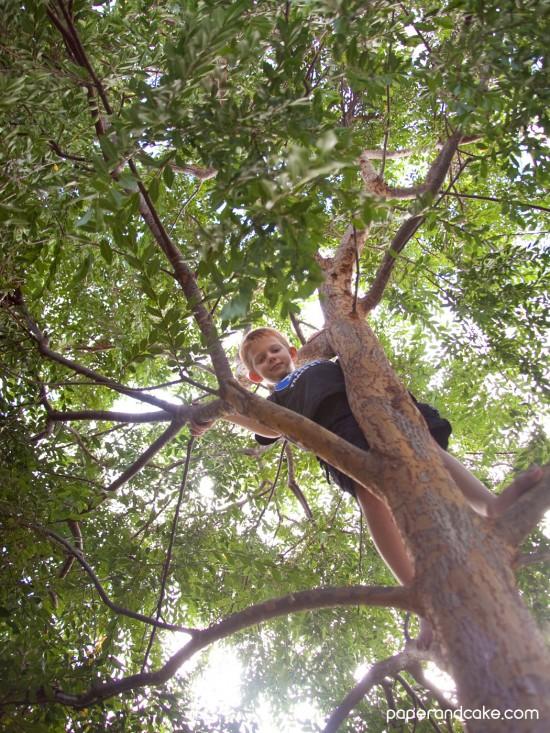 essay on jackfruit tree